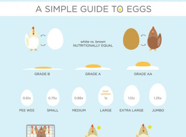 Infographic Example: A Simple Guide to Eggs (credit: Culinaut)