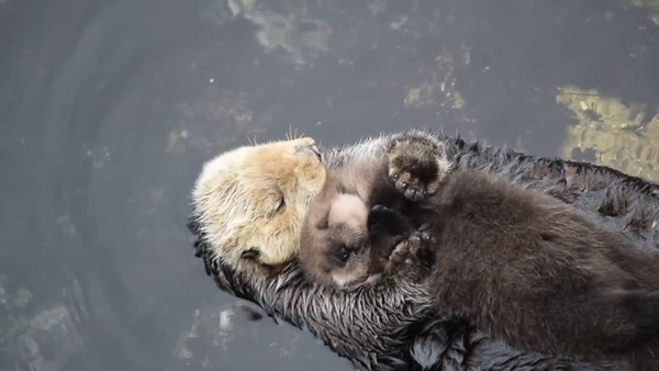 Coub   Sleep on Mom 💕