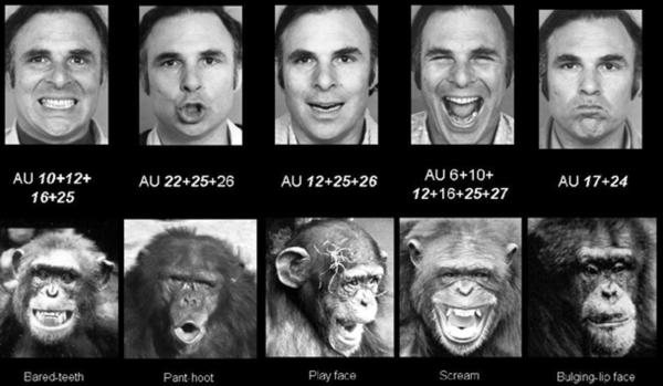Ekman's Facial Action Coding System (FACS)