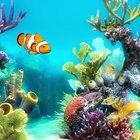 Emoji Aquarium (@EmojiAquarium)