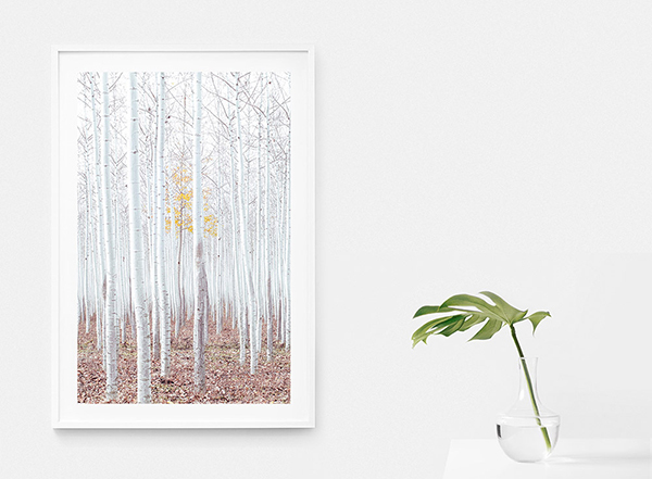 Noel Dong — Fall remnant (50x75cm edition of 30)