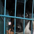 Taiwan bans slaughter of cats and dogs for human consumption - BBC News