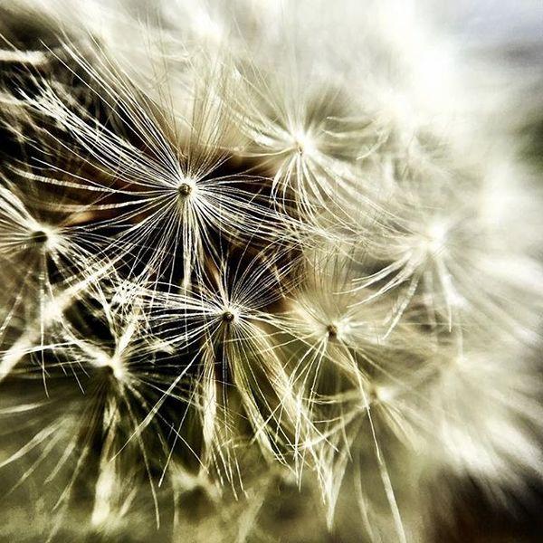 iPhone + clip-on-lens = wijze beelden.