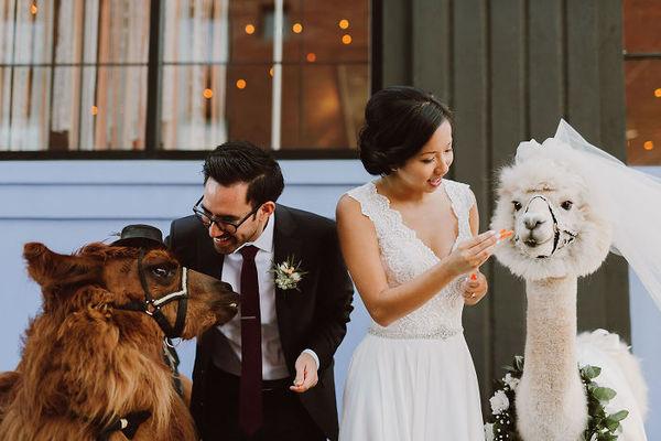 Make every wedding better with llamas