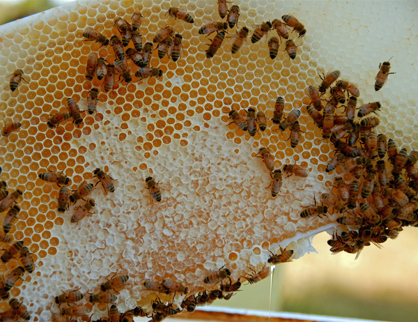 Buying Organic Honey? Here's What You Should Know. | Civil Eats