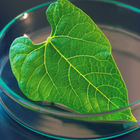Researchers create hydrogen fuel with artificial photosynthesis