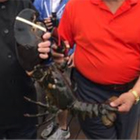 'Louie' lobster, 132 years old, pardoned and released
