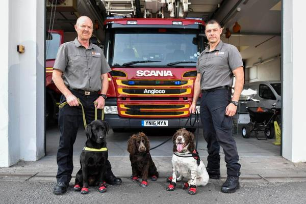 When duty called, these four-legged heroes stepped up!
