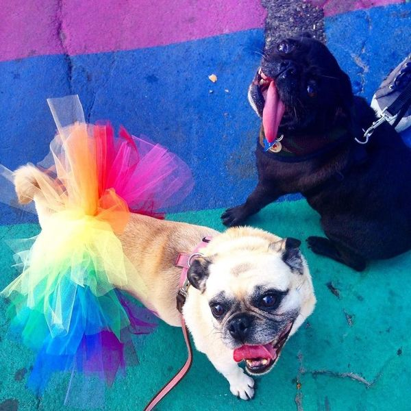 Even our very own @Ridley & @LizzieThePug joined the festivities! 🌈