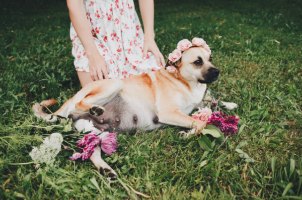 This dog's maternity shoot is probably better than yours, unless you're Beyoncé