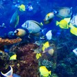 Tokens for ecosystem investing – Humanizing the Singularity – Medium