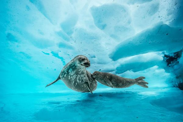 Deepest Dive Under Antarctica Reveals a Shockingly Vibrant World