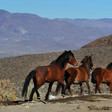 Congressional committee vote is death warrant for mustangs and wild burros, advocate says