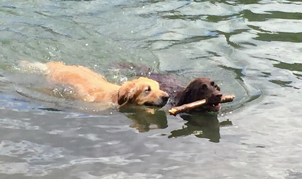 Chewy and Ketchum rescue a stick from Titus Lake in Idaho. The retrievers belong to loyal subscribers Alicia, Eric, and Jacqueline. Submit your pet photos for publication in an upcoming issue!