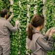 This High-Tech Vertical Farm Promises Whole Foods Quality at Walmart Prices