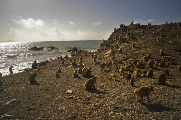 Hurricane mauled PR's renowned Monkey Island research center - SFGate