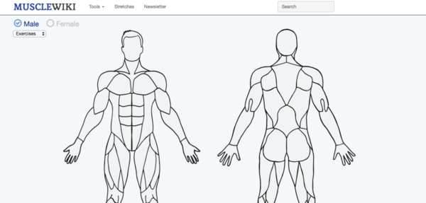 Fit-Tech Feature Of The Week - MuscleWiki • Shape — Blog