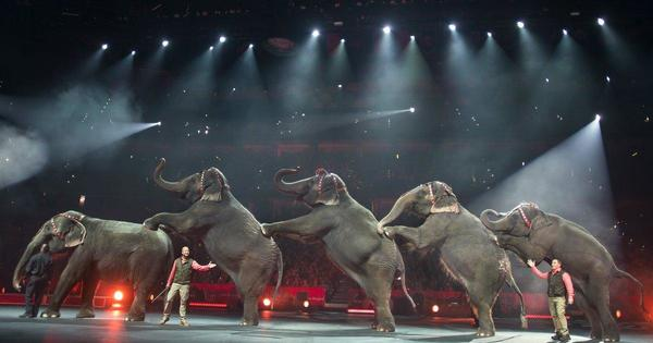Elephants officially banned from circuses in New York  - NY Daily News