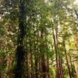 A biologist believes that trees speak a language we can learn