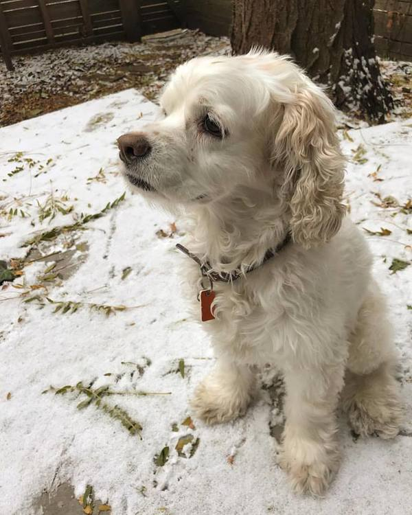 Bailey, who belongs to loyal subscriber and podcast guest Sonya, doesn't understand why it's snowing. You live in Chicago, Bailey!