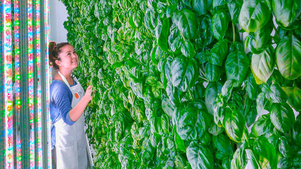 Plenty Vertical Farming. SoftBank investment July 2017.