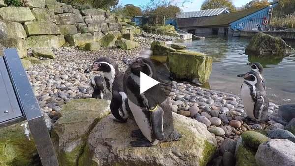 Karma Grip Stablisation Test on Vimeo