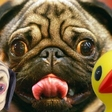 Top vijf bizarre AliExpress koopjes en gadgets die je moet checken #30