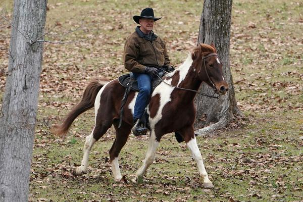 De Republikeinse kandidaat-senator Roy Moore gaat te paard naar het stembureau in Alabama (foto: Reuters)