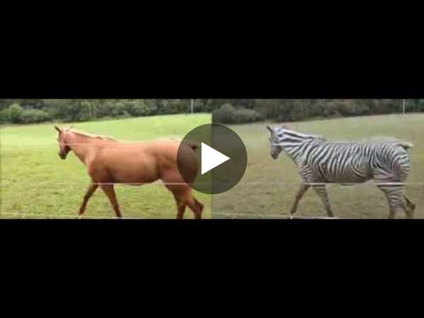 Turning a horse video into a zebra video (by CycleGAN) - YouTube
