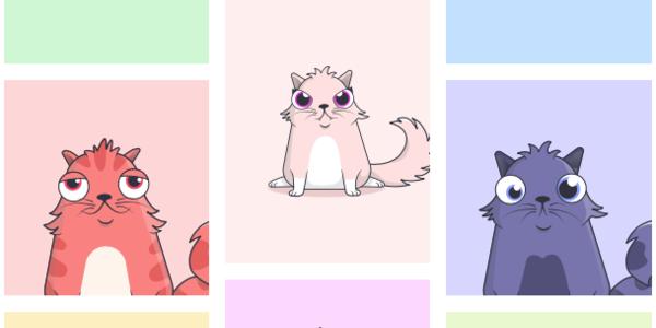 😻 Bu sevimli arkadaşlarımızın kripto kediler olduğunu biliyor muydunuz?