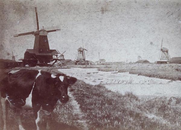 klik op de koeienneus om bij het verhaal van Sjors te komen