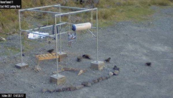 A still image from a video camera observing the birds playing with their new gym