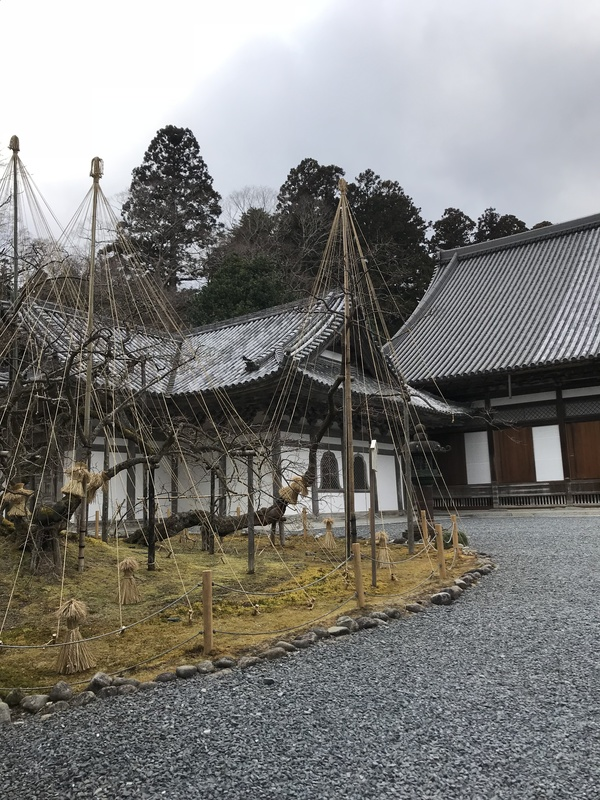 Zuiganji temple - trees roped off to protect from snowfall