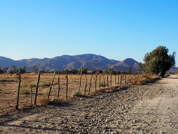 Exploring Natural Wine In Mexico's Valle de Guadalupe