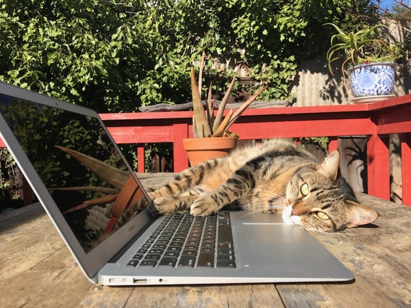 Pono, who belongs to loyal subscribers Genna and Kiera, encourages us all to take a break from typing.