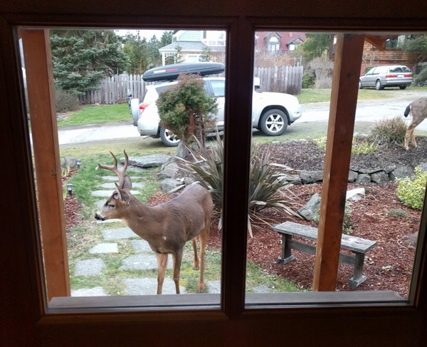 Deery, who belongs to loyal subscribers Ben and Julie, would like to come inside the house. Do you have a pet who should appear in The Highlighter? Nominate your pet today at j.mp/nominatepet.