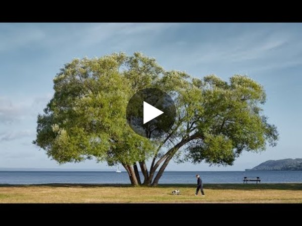 The Broccoli Tree: A Parable - YouTube