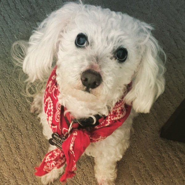 Archie, who belongs to loyal subscriber Sophie, would like a snack right now, please. Want your pet to appear in The Highlighter? j.mp/nominatepet