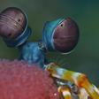 Underwater GPS Inspired by Shrimp
