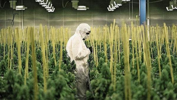 So sieht die schweizerische Bilanz nach 2 Jahren Cannabis aus