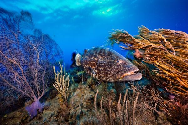 How Belize Is Restoring Its Coral Reefs and Damaged Ocean