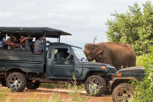 Safari jeeps