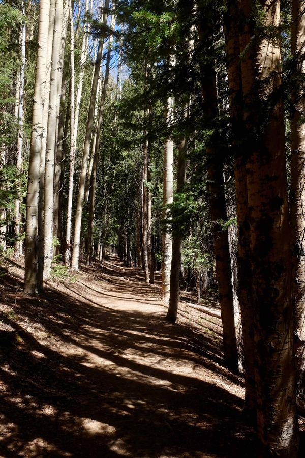 A walk amongst the pines and Aspens just outside of Santa Fe.