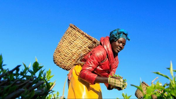 Kenya Using Blockchain to Disrupt Agriculture