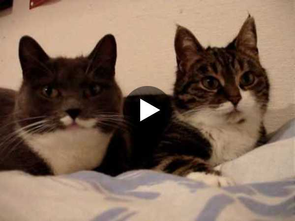 This is a lot of text, so here's a cute cat video to break it up!