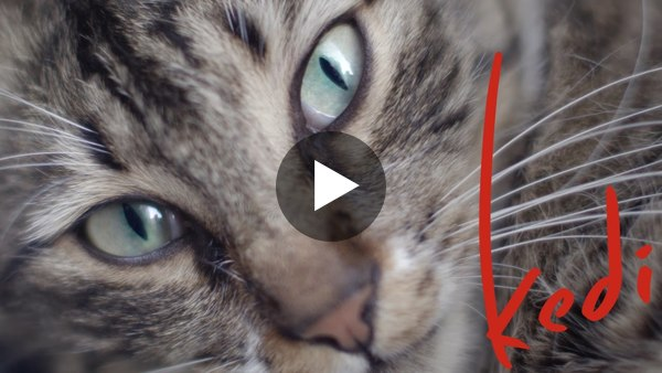 Kedi - Official U.S. Trailer