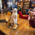 Today's Catty Question: Who Thought Cat Cafes Were a Good Idea? - WSJ
