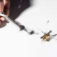 RoboFly is het mechanische insect die zelf op klimaatmissie gaat