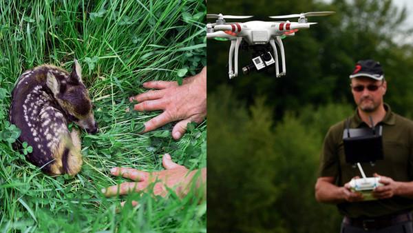 Tierretter setzen jetzt Infrarot-Drohnen ein, um Rehkitze vor schweren Mähdreschern zu retten
