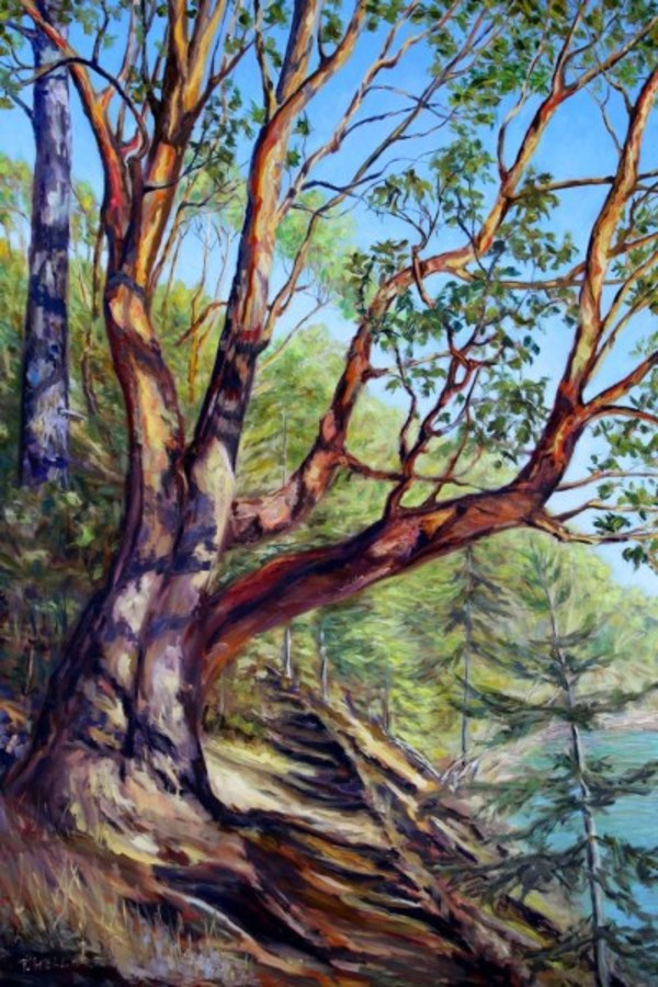 Storytelling Arbutus Tree Bennett Bay Mayne Island | Artwork Archive